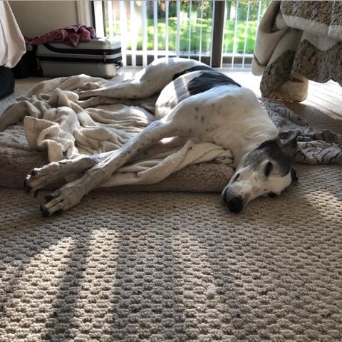Leda sleeping on mom's carpet