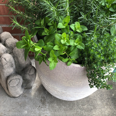 Rosemary, mint, thyme and sage growing in a pot