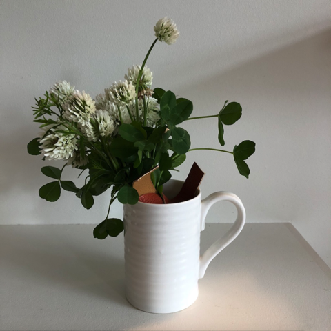 a bouquet of clover in a white mug