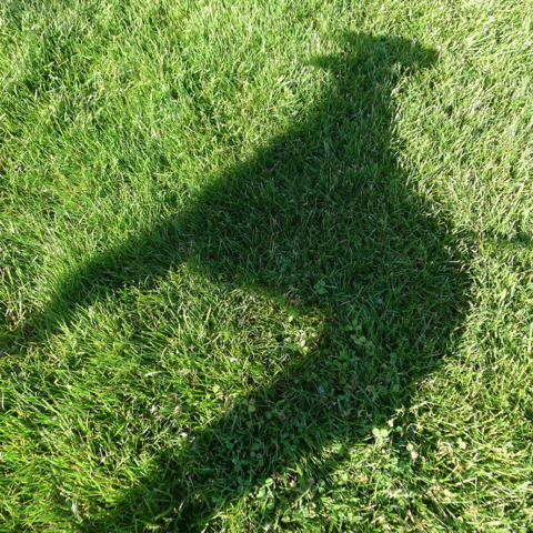 Shadow of a greyhound on green grass