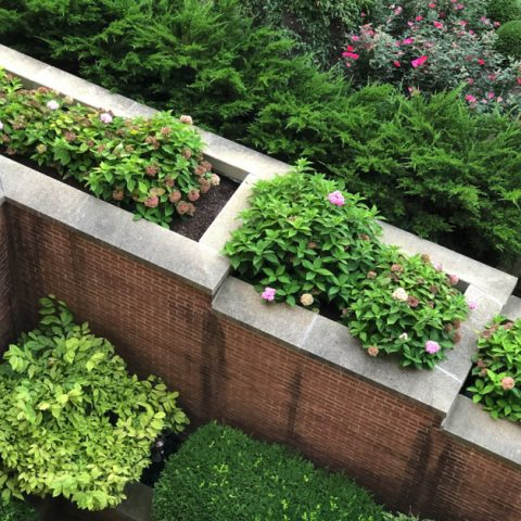 Overhead view of fading hydrangea blooms in a brick planter