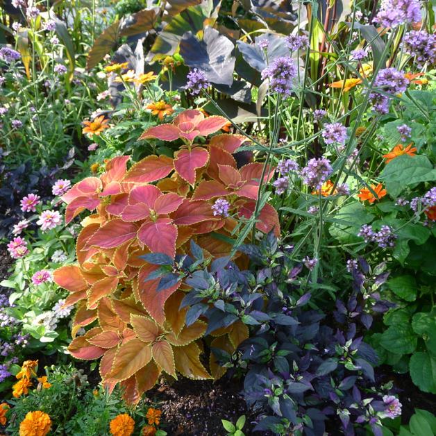 Summer flowers of orange and purple, lavender and green