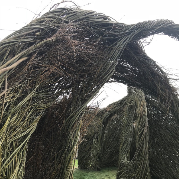Willow branches formed to make a shelter