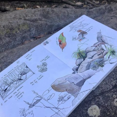Bethan's open sketchbook showing leaves, rocks and plants, some black and white and some with color